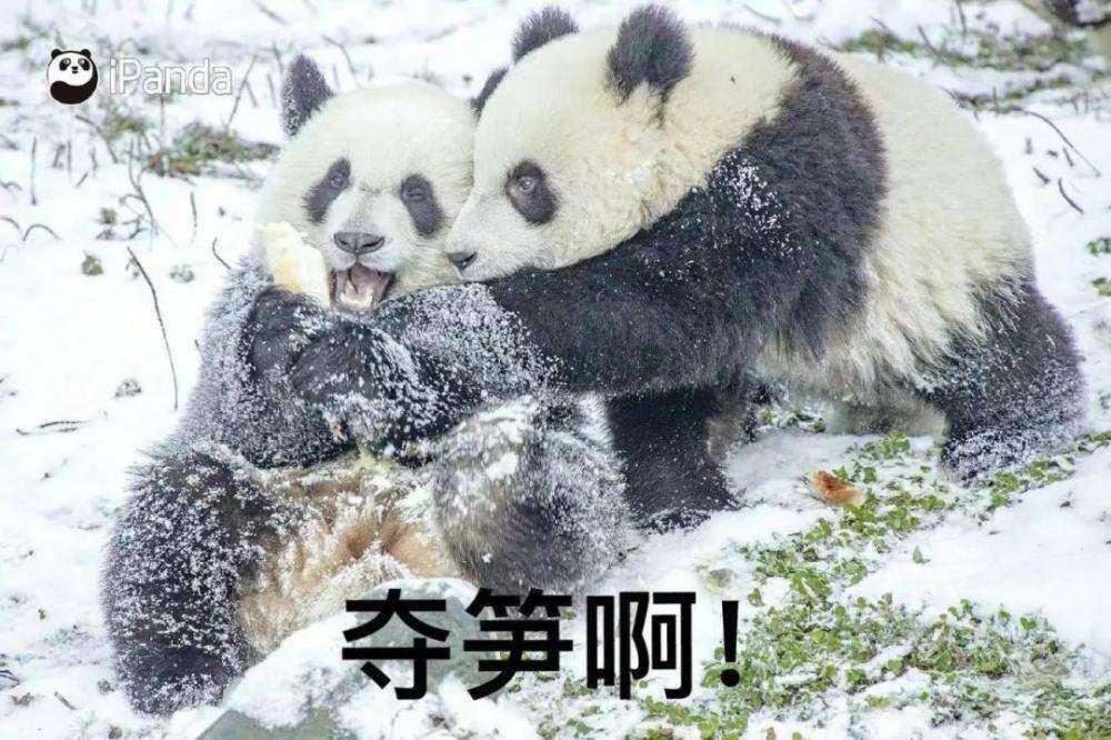 <a href='https://www.zhouxiaohui.cn'><a href='https://www.zhouxiaohui.cn/duanshipin/'>视频号</a></a>新增关注按钮;快手预计2月5日上市交易 | 新榜情报-第6张图片-周小辉博客